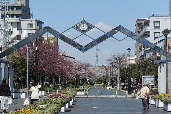 桜 東綾瀬公園