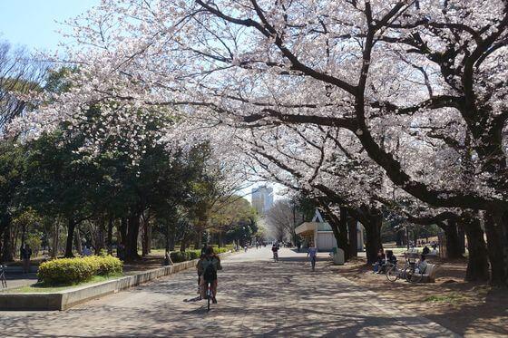 桜 光が丘公園