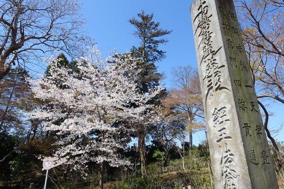 本土寺 お花見