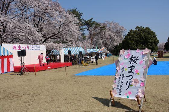 狭山稲荷山公園 桜まつり