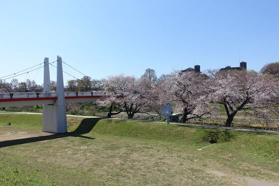 志木市 桜