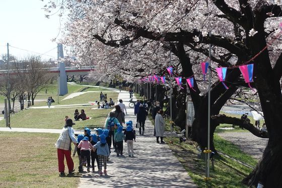 いろは親水公園 桜 ライトアップ