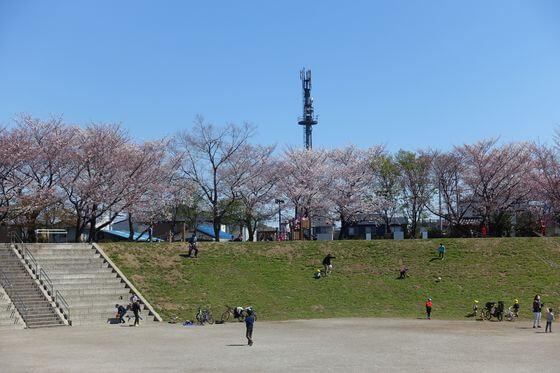 いろはコミュニティパーク 桜