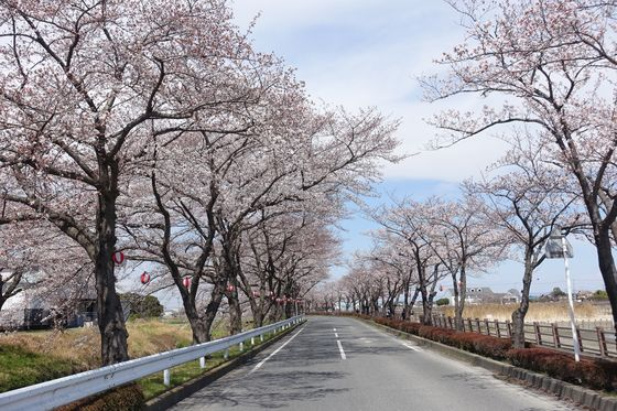 伊佐沼 桜