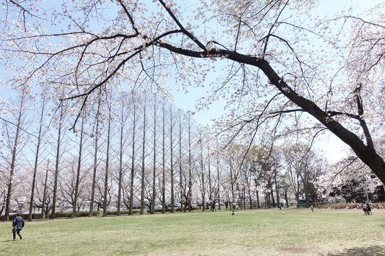 伊佐沼公園 多目的広場