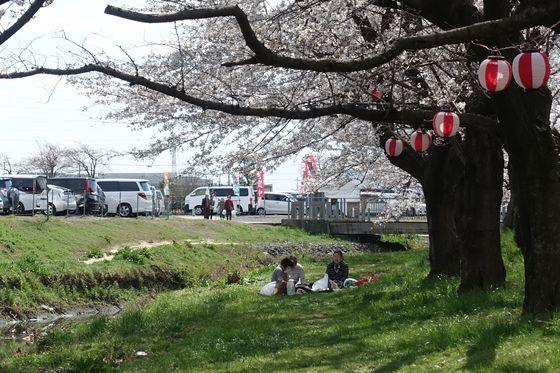 伊佐沼公園 お花見