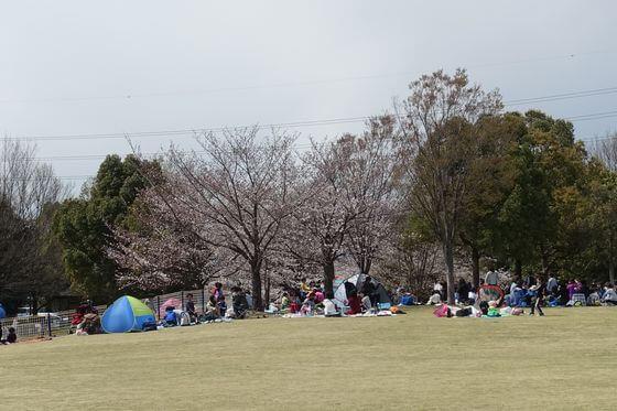 川越運動公園 自由広場 桜