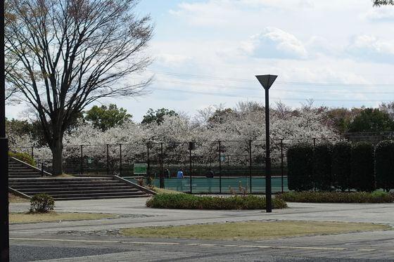 川越運動公園 テニスコート 桜