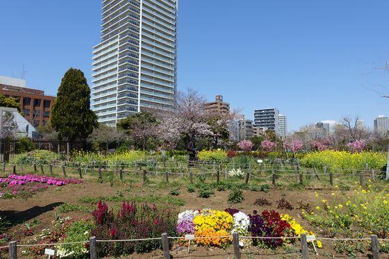 木場公園 都市緑化植物園