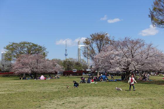 木場公園 スカイツリー
