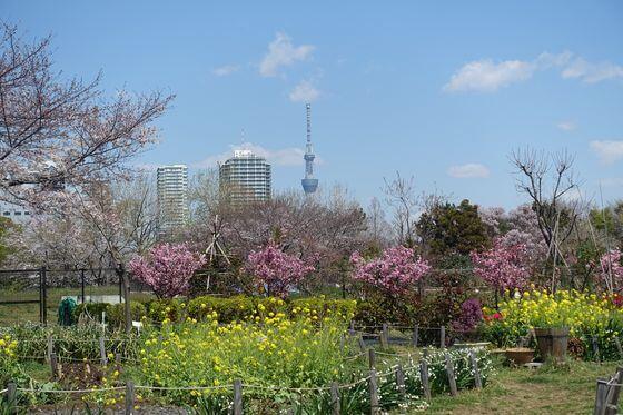 木場公園 海棠