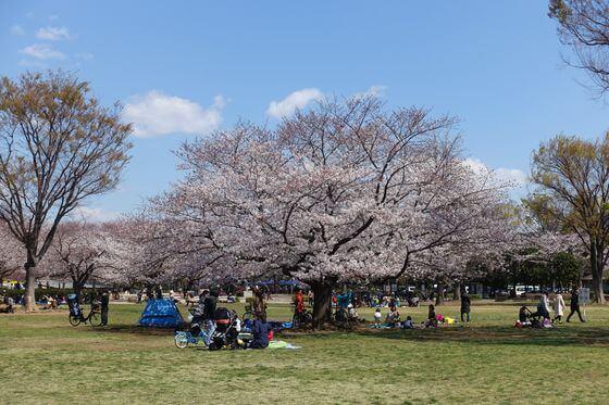 木場公園 花見