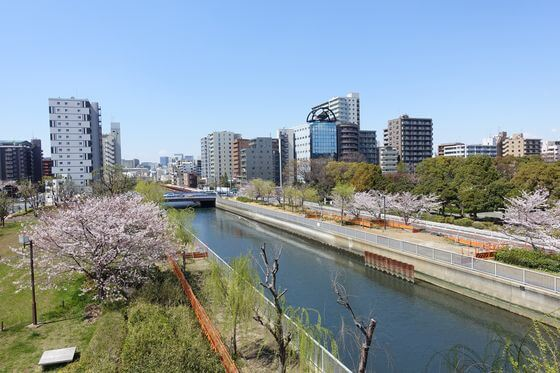 木場公園大橋 桜