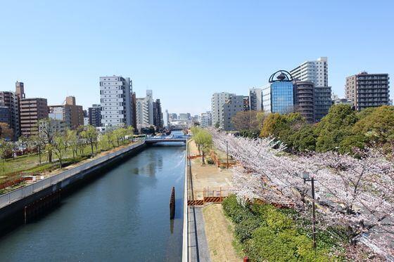 木場公園 仙台掘川 桜