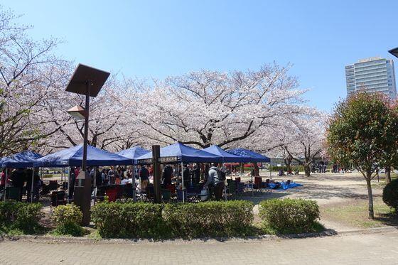 木場公園 バーベキュー場 桜