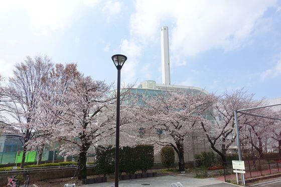 希望丘公園 桜