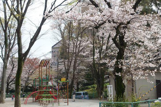 希望丘公園 世田谷 桜