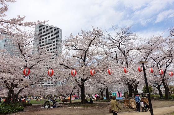 錦糸公園 桜 ライトアップ