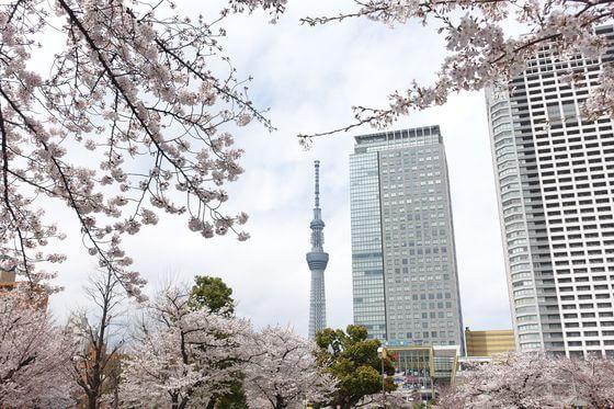錦糸公園 スカイツリー 桜