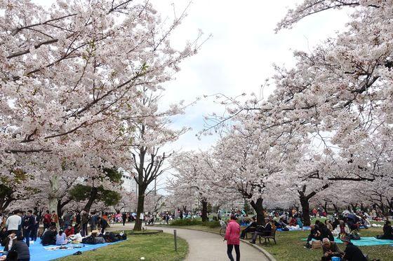 錦糸公園 お花見