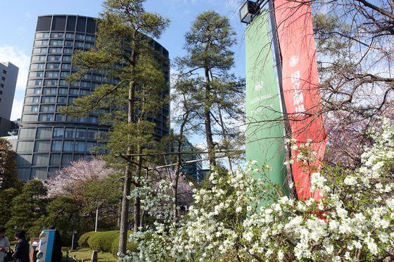 千代田区 桜