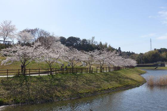 桜 公津の杜公園