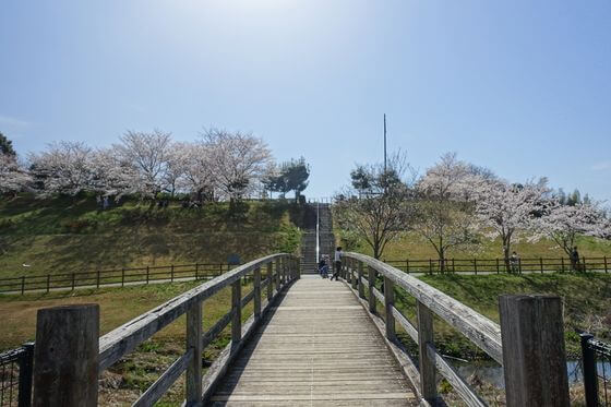 成田市 桜