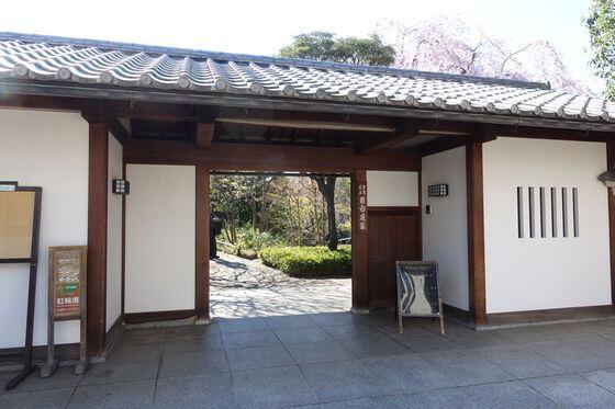 目白庭園 桜 ライトアップ