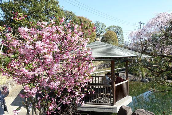 目白庭園 海棠