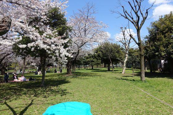 南砂三丁目公園 お花見