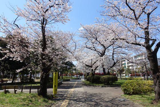 南砂三丁目公園 桜並木