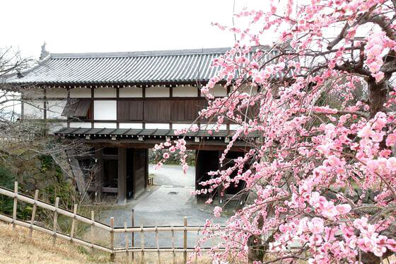 奈良県 梅