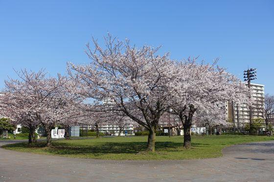 大島小松川公園 スポーツ広場