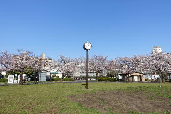 大島小松川公園 スポーツ広場 花見