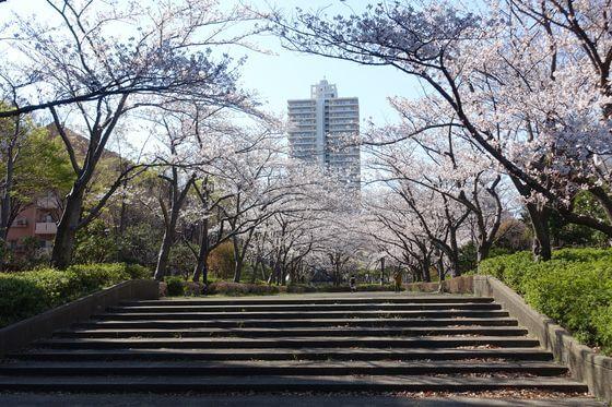 大島小松川公園 季節の広場 桜並木