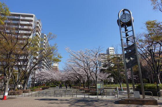 大島小松川公園 季節の広場 桜