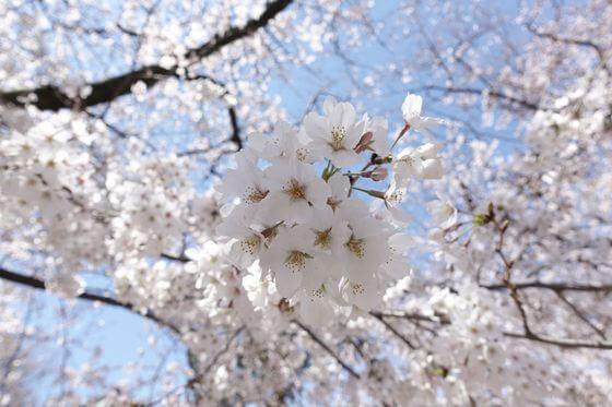 蓮馨寺 お花見