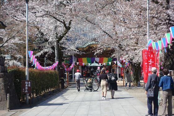 川越 蓮馨寺 桜