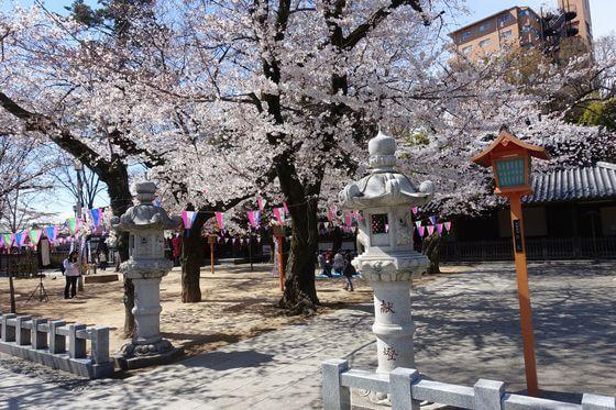 蓮馨寺 川越桜まつり