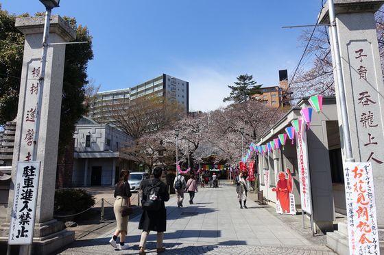 蓮馨寺 川越 桜