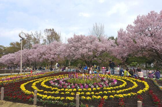 蘆花恒春園 桜