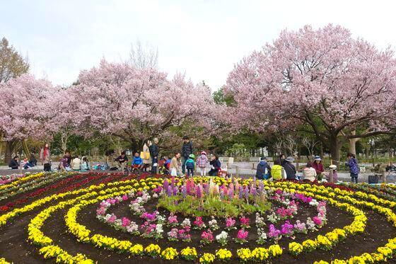 蘆花恒春園 高遠小彼岸桜