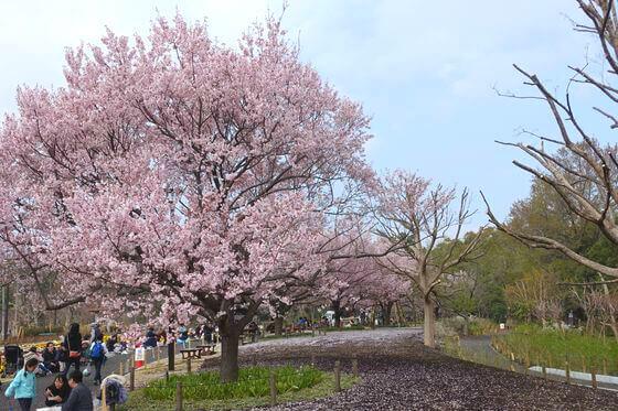 芦花公園 花見