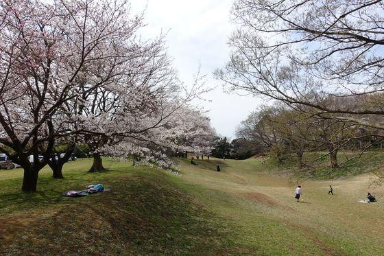 佐倉城址公園 空堀 桜