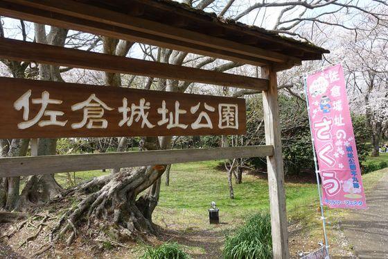 佐倉城址公園 桜 樹齢
