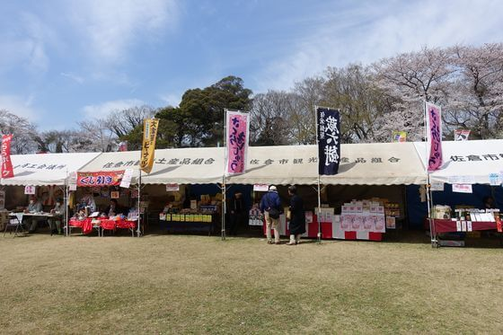 佐倉城址公園 桜祭り