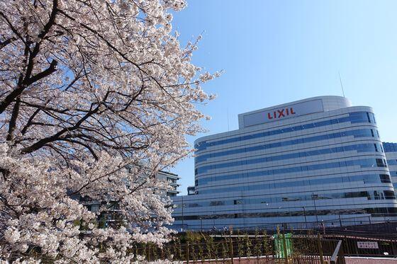 横十間川 桜並木