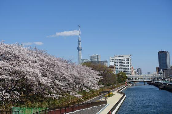 本村橋 江東区 桜