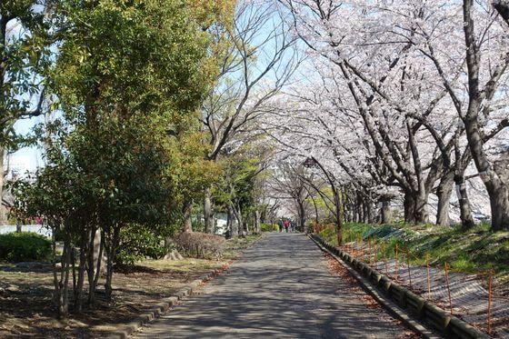 猿江恩賜公園 桜並木