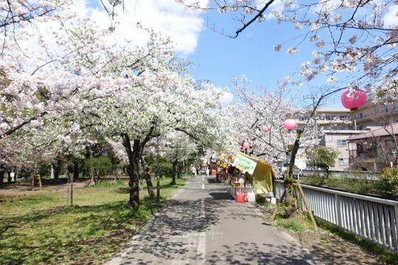 東陽町駅 桜